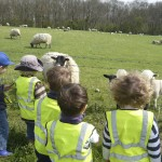 Seeing the sheep and lambs